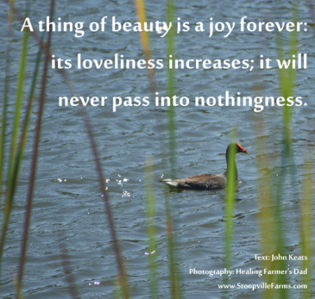 John Keats Quotes Images A Thing Of Beauty