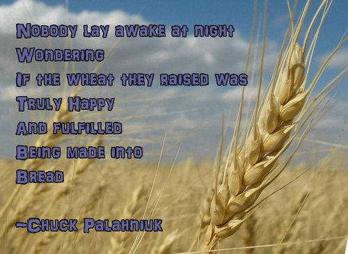 Nobody Lay Awake At Night Wondering If The Wheat They