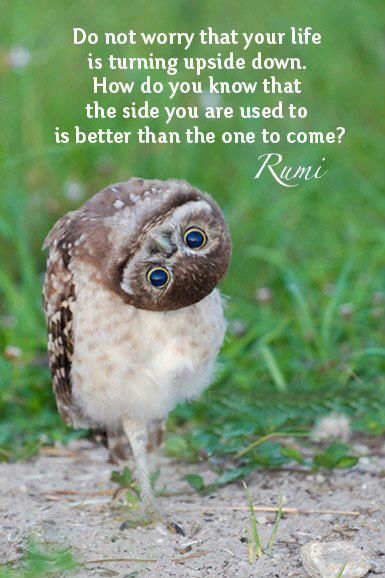 Image result for rumi quotes on worry